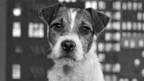 Top 5 - Die cleversten Hunde