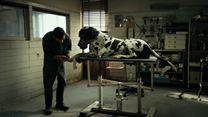 Dogman Trailer DF