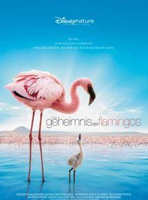 Das Geheimnis der Flamingos