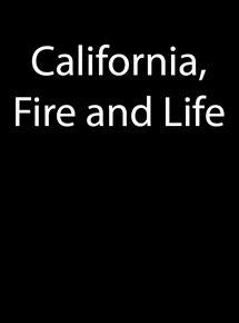 Die Sprache des Feuers