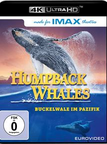 Humpback Whales - Buckelwale im Pazifik