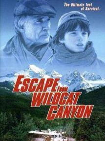 Im Tal der Wildkatzen (TV)