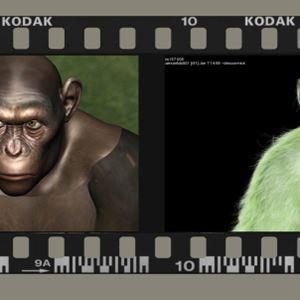 Planet der Affen: Prevolution : Bild