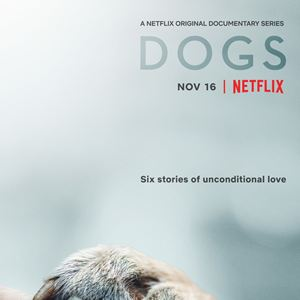 Dogs : Kinoposter