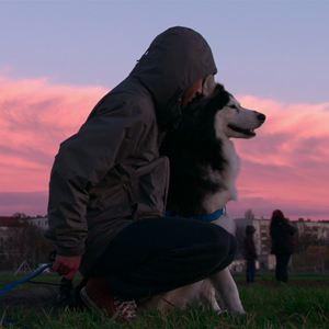 Dogs : Bild