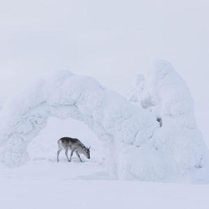 Ailos Reise : Bild
