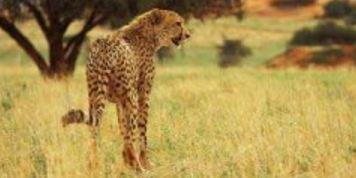 African Cats: Neue Naturdoku der Disney-Studios