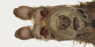 """""""Isle Of Dogs"""": Wes Anderson und Edward Norton präsentieren erstes Material und Infos zu ihrem Stop-Motion-Abenteuer"""