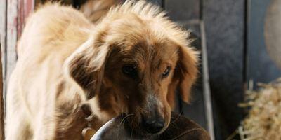 """Doch keine Tierquälerei? Neue Untersuchungen zum """"Bailey - Ein Freund fürs Leben""""-Skandal mit überraschendem Ergebnis"""