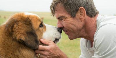 """""""Bailey - Ein Freund fürs Leben"""": Viel diskutierter Hundefilm bekommt Fortsetzung spendiert"""