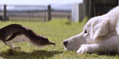 """""""Oddball - Retter der Pinguine"""": In der deutschen Trailerpremiere wird eine Hündin zur Vogel-Beschützerin"""