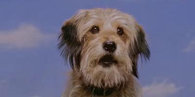 "Erster Teaser zu ""Benji"": Netflix bringt den süßen Vierbeiner zurück"