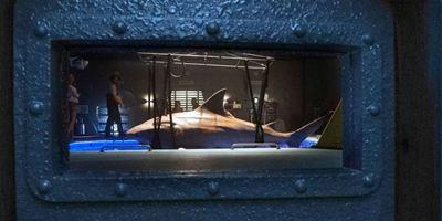 """""""Deep Blue Sea 2"""": Zähne, Muskeln und Killerinstinkte im deutschen Trailer zum Hai-Trash"""