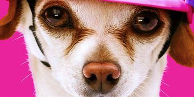 """Süß! Im ersten Trailer zu """"Dog Days"""" werden reihenweise Stars durch Hunde glücklich"""
