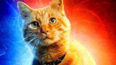 """""""Captain Marvel""""-Publikum ist sich einig: Die Katze ist (selbstverständlich) die beste Figur"""