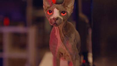 """Mit einer Terror-Nacktkatze: Trailer zum Billig-""""Friedhof der Kuscheltiere"""" """"Pet Graveyard"""""""