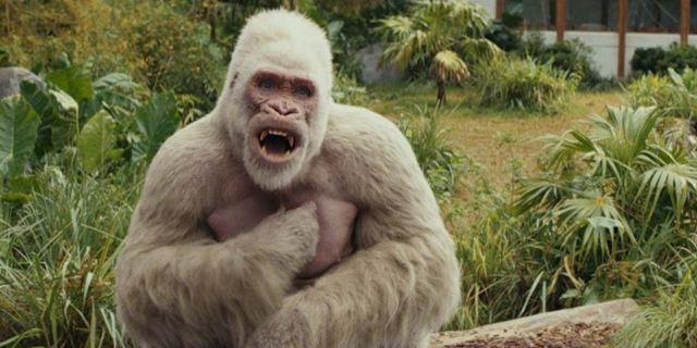 """Affig oder knuffig? Der """"Rampage""""-Soundtrack wurde von echten Affen """"gesungen"""""""