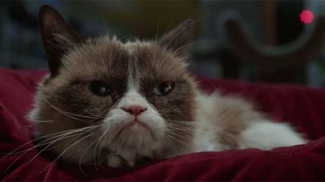 """""""Grumpy Cat's miesestes Weihnachtsfest ever"""": Im deutschen Trailer gibt's schlechte Laune unter den Baum"""