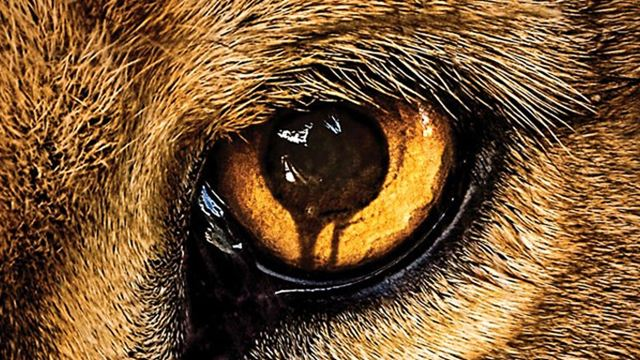 """In """"Zoo"""" rächt sich die Tierwelt an der Menschheit: Deutsche Erstausstrahlung der Serie ab heute auf ProSieben"""