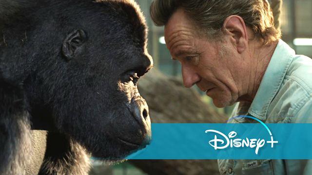 Neu auf Disney+ im September 2020: Tier-Abenteuer mit Mega-Cast & mehr