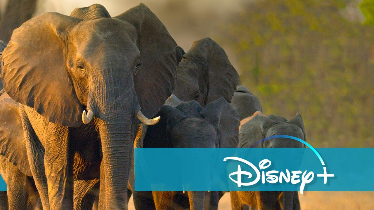 Highlights für Tierfreunde: Disney+ stockt sein Programm gewaltig auf