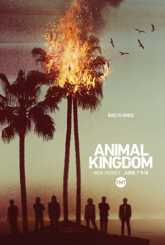 Animal Kingdom Staffel 3