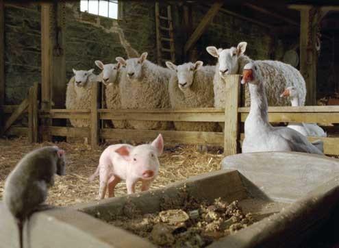 Schweinchen Wilbur und seine Freunde : Bild Gary Winick