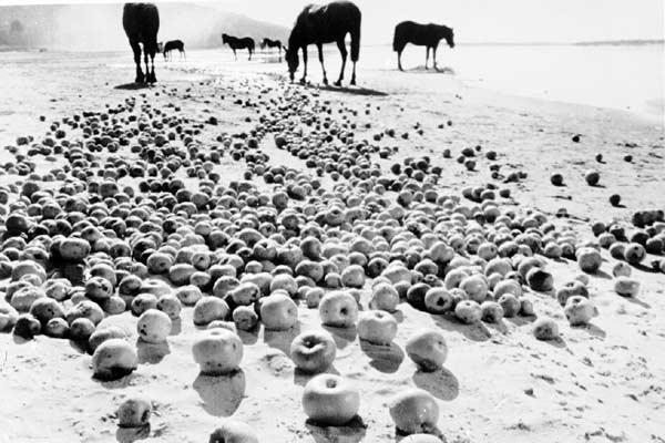 Iwans Kindheit : Bild Andreï Tarkovski