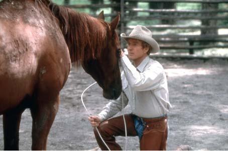 Der Pferdeflüsterer : Bild Robert Redford