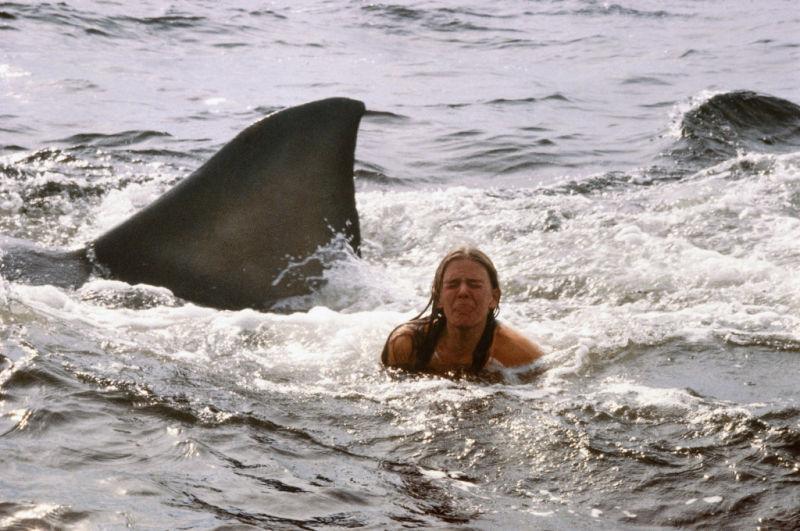 Der weiße Hai 2 : Bild