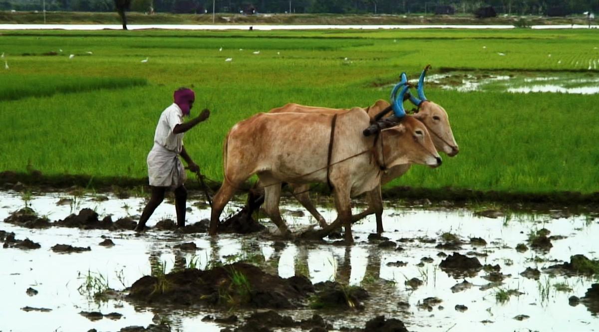 Good Food, Bad Food - Anleitung für eine bessere Landwirtschaft : photo