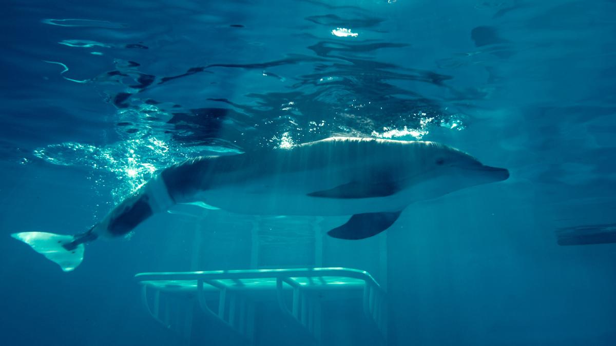 Mein Freund, der Delfin : Bild Charles Martin Smith