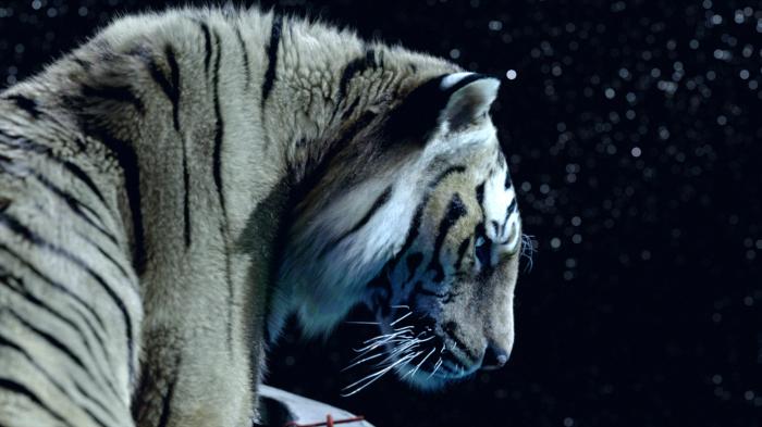 Life of Pi: Schiffbruch mit Tiger : Bild