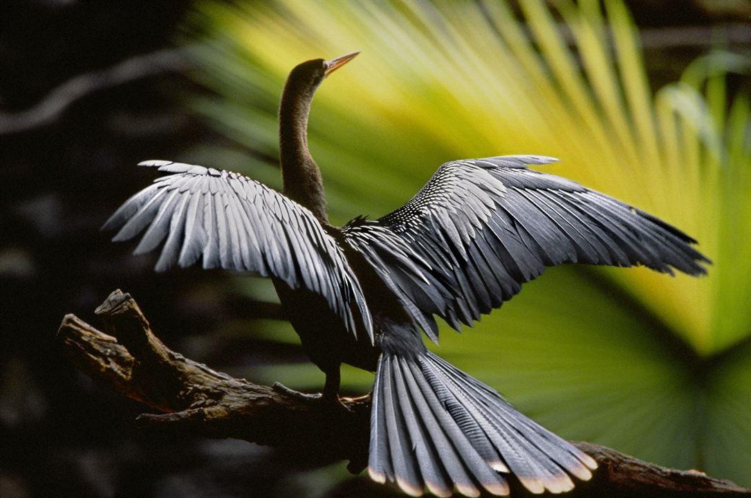 Amazonia - Abenteuer im Regenwald : Bild