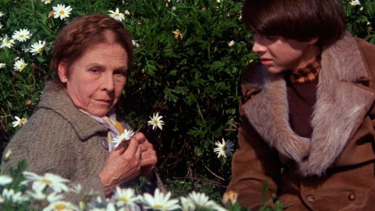 Harold und Maude : Bild