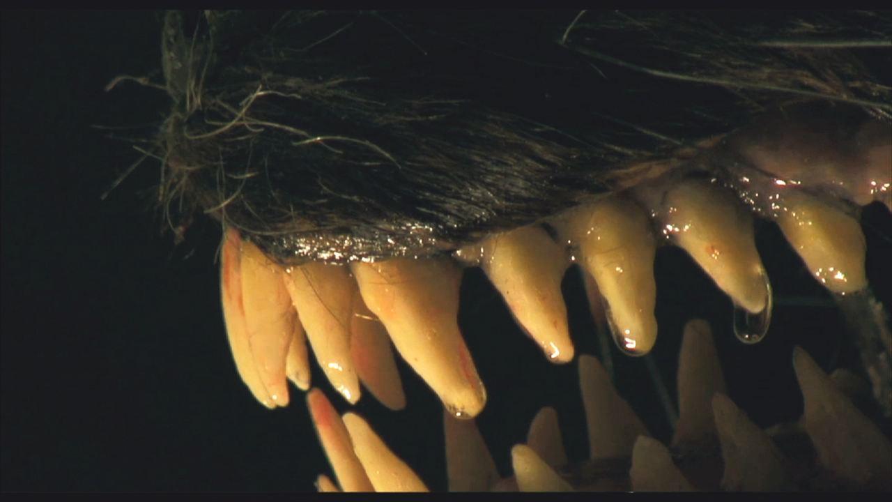 Blutmond: Die Nacht der Werwölfe : Bild