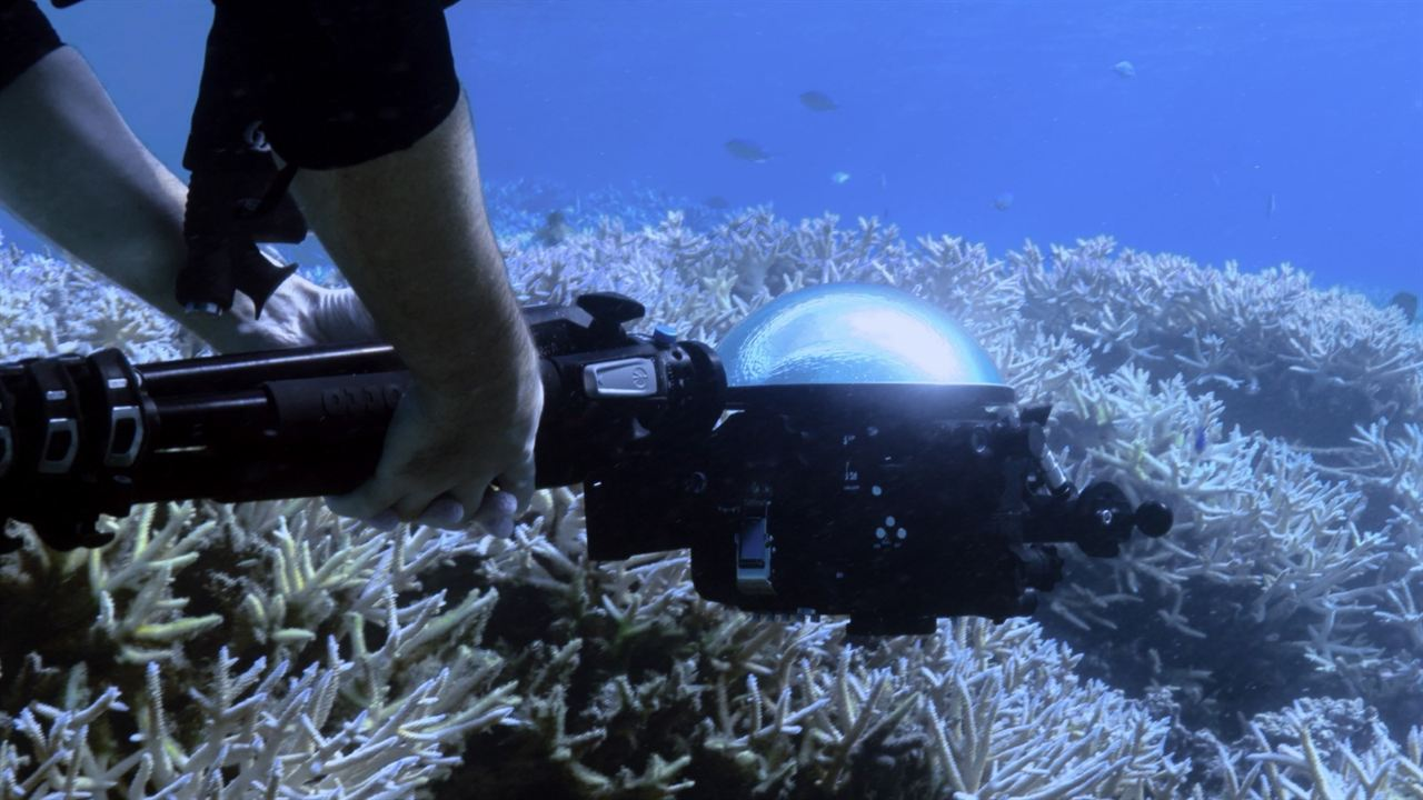 Chasing Coral : Bild