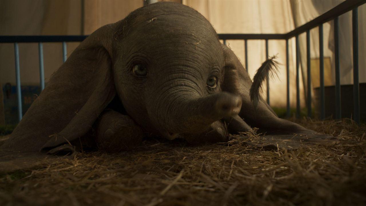 Dumbo : Bild