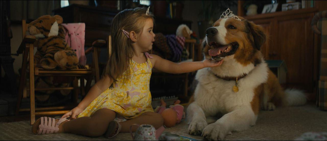 Bailey - Ein Hund kehrt zurück : Bild Emma Volk