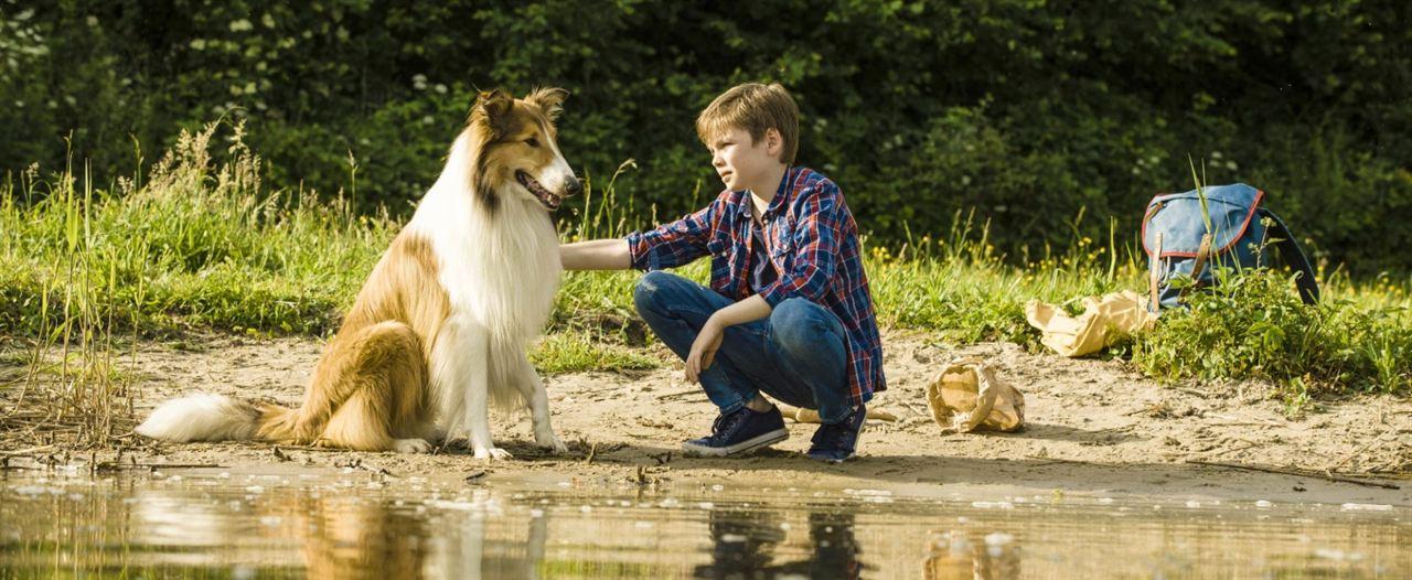 Lassie - Eine abenteuerliche Reise : Bild Nico Marischka