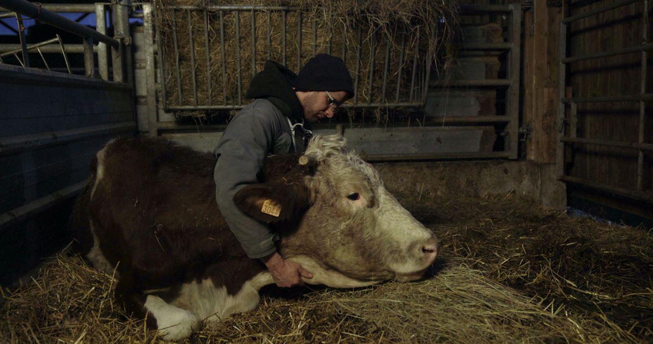 Cyrille, agriculteur, 30 ans, 20 vaches, du lait, du beurre, des dettes : Bild