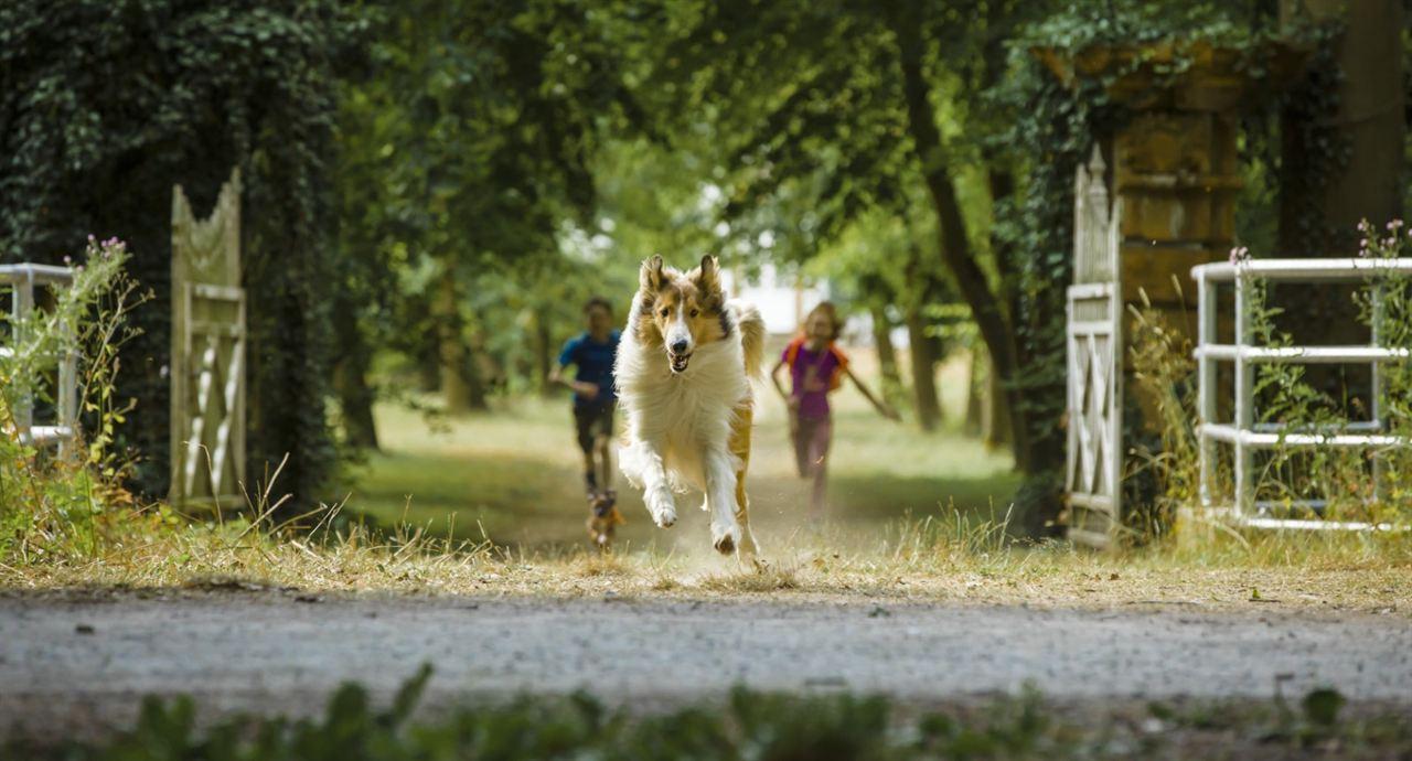Lassie - Eine abenteuerliche Reise : Bild