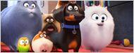 """Deutsche Kinocharts: Die """"Pets"""" setzen sich weit vor """"Star Trek Beyond"""" auf Platz eins"""