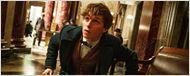 """Easter-Egg: Newt Scamander war während der Handlungszeit der """"Harry Potter""""-Filme in Hogwarts"""