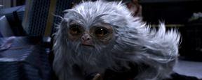 """Neue Bilder zum """"Harry Potter""""-Prequel """"Phantastische Tierwesen und wo sie zu finden sind"""""""