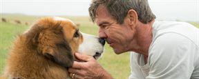 """""""Keine Tiere wurden verletzt"""": """"Bailey""""-Autor reagiert auf Vorwurf der Tierquälerei"""