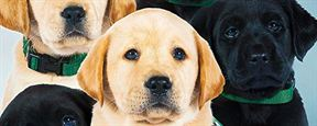 "Im Trailer zu ""Pick Of The Litter"" werden süße Hundewelpen zu Begleithunden ausgebildet"