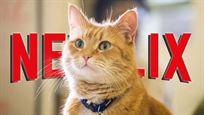 """Neu bei Netflix: Katzen-Content und """"Bond""""-Bösewicht Christoph Waltz beim virtuellen Therapeuten"""
