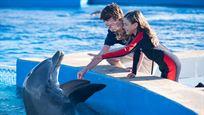 """Das Abenteuer geht weiter: Deutscher Trailer zu """"Bernie, der Delfin 2"""" – natürlich wieder mit """"Hercules"""" Kevin Sorbo"""