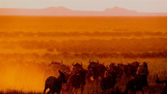 Afrika - Das magische Königreich Trailer (2) OV
